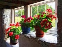 Three Flowerpots on Windowsill von Susan Savad