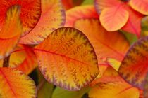 Autumn Leaves Herbstfarben I by lisebonne