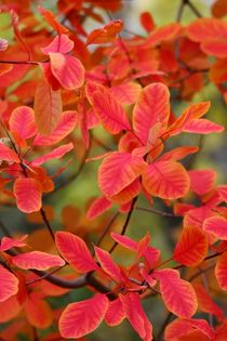 Autumn Leaves Herbstfarben II by lisebonne