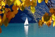 Autumn Leaves Herbstfarben IV von lisebonne