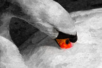 The Proud Swan Art von David Pyatt