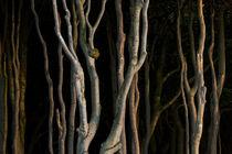 Wald-4220-davidpinzer-1410
