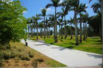 Schatten im Miami Palmenpark by ann-foto