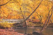 Billewanderweg im Herbst von Florian Kunde