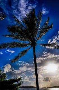 Palme & blauer Himmel von mroppx