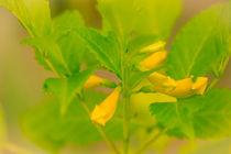 Tropische gelbe Blüte by mroppx