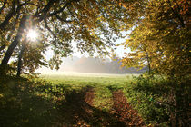 Die Spur führt ins Licht by Bernhard Kaiser