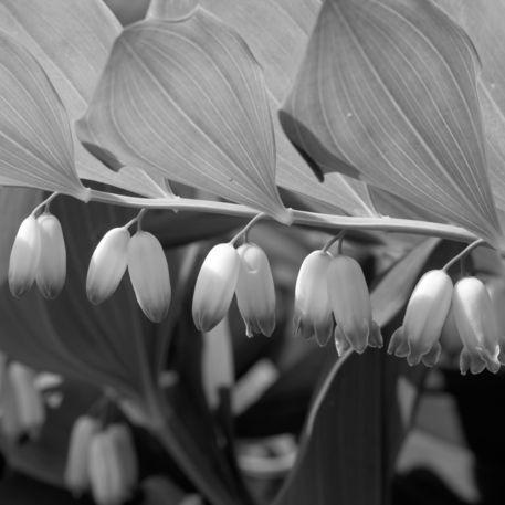 Flower-monochrome-12