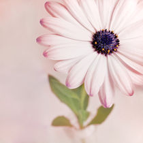 Blütenspitzen II von Josephine Mayer-Hartmann