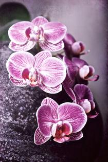 Orchidee by Josephine Mayer-Hartmann