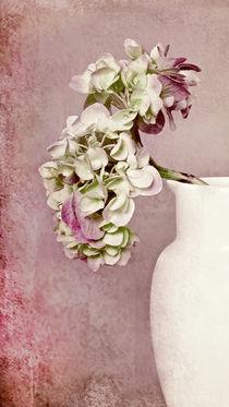 Hortensie in Vase von Josephine Mayer-Hartmann