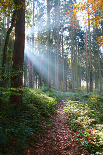 'Lichtstimmung im Wald' by Bernhard Kaiser