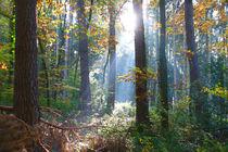Herbstwald by Bernhard Kaiser