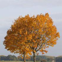 Bäume im Schmuckkleid_04 von Angelika  Schütgens