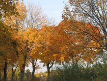 Straßenbäume im Herbstkleid by Angelika  Schütgens