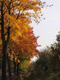 Bäume im Schmuckkleid_03 von Angelika  Schütgens