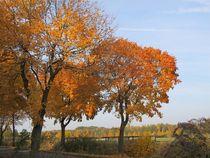 Bäume im Herbst von Angelika  Schütgens