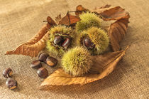 Sweet chestnuts by Brian  Fry