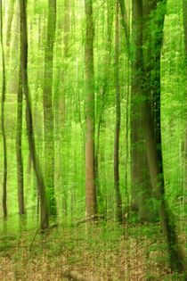 Sommer-Wald by Jan-Marco Gessinger