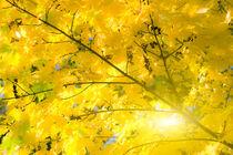 Goldene Herbstblätter von fraenks