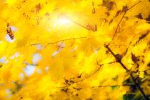 Goldene Herbstblätter 2 von fraenks