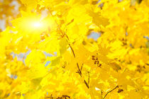 Golden autumn leaves 4 by fraenks