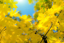 Golden autumn leaves 2 von fraenks