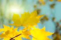 Goldene Herbstblätter 4 von fraenks