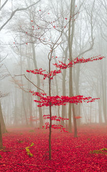 Magic forest in red and white by wsfflake