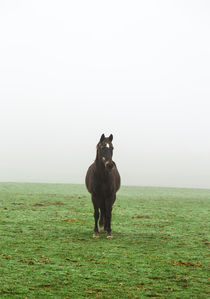 Horse in the mist on a meadow by wsfflake