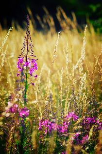 Pinkflowers-grasses
