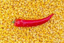 Paprika auf Mais als Hintergrund von wsfflake