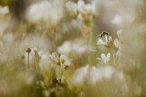 A buzzing spring by Tony Töreklint