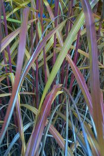 Herbstfarben von uta-behnfeld