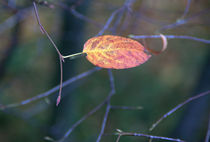 Autumn leave by uta-behnfeld