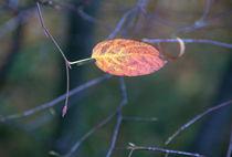 Autumn leave von uta-behnfeld