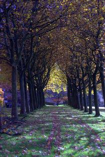 Herbstallee von uta-behnfeld