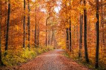 Herbst im Naturpark Schönbuch von Matthias Hauser