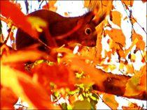 ~ Sweet Squirrel ~ von Sandra  Vollmann