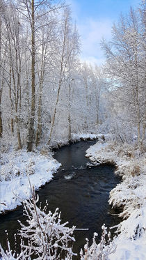 Winter Stream by Amber D Hathaway Photography