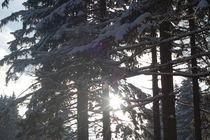 Winter, Sonne, Schnee und Frohsinn by alinekuhaupt