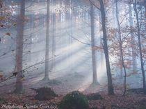 Märchenwald im Herbst von photodesign-kerstin-esser