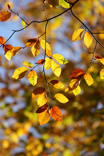 Goldener Herbst I by meleah