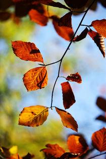 Goldener Herbst II von meleah