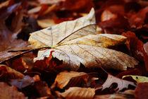 Goldener Herbst III von meleah