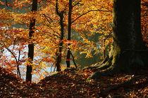 Goldener Herbst IV von meleah
