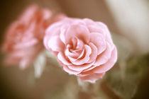 Eine einzelne Rose von oben Pastell  von Peter-André Sobota