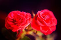 A pair of roses in oil on dark background von Peter-André Sobota
