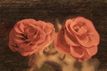 A pair of roses in sketch3 on dark background by Peter-André Sobota