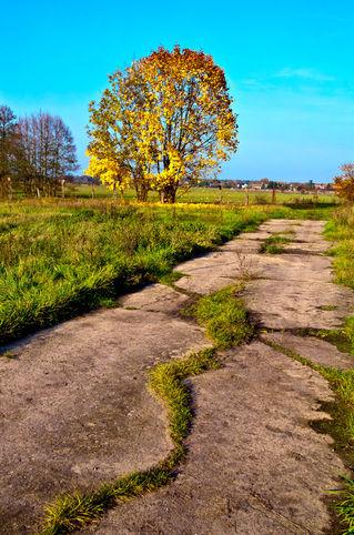 Golden-autumnal-spirit